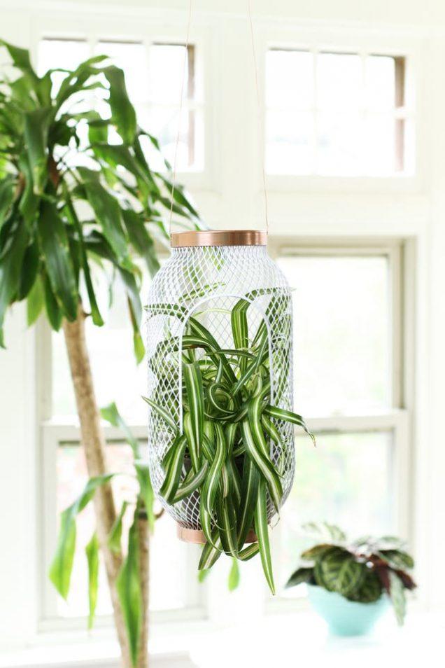 Plantas De Interior Gu A De Jardiner A