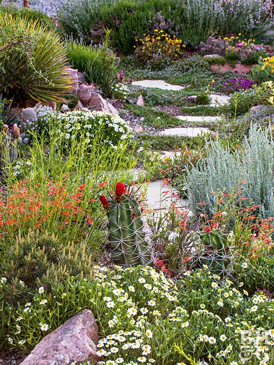 A garden adapted to the drought 2