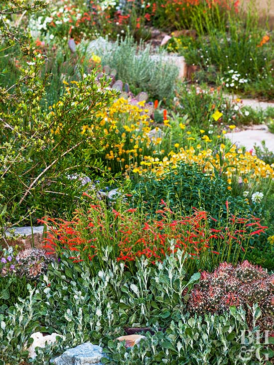 A garden adapted to the drought 5