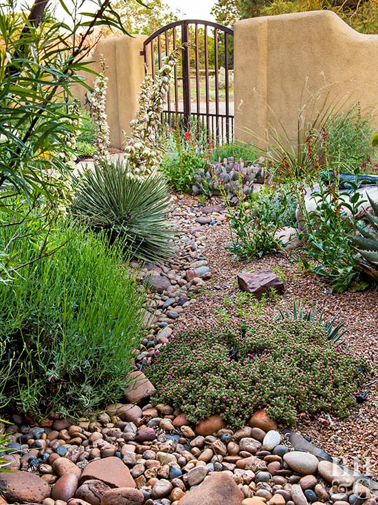 A garden adapted to the drought 6