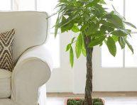 imagen Árboles de interior para decorar cualquier espacio