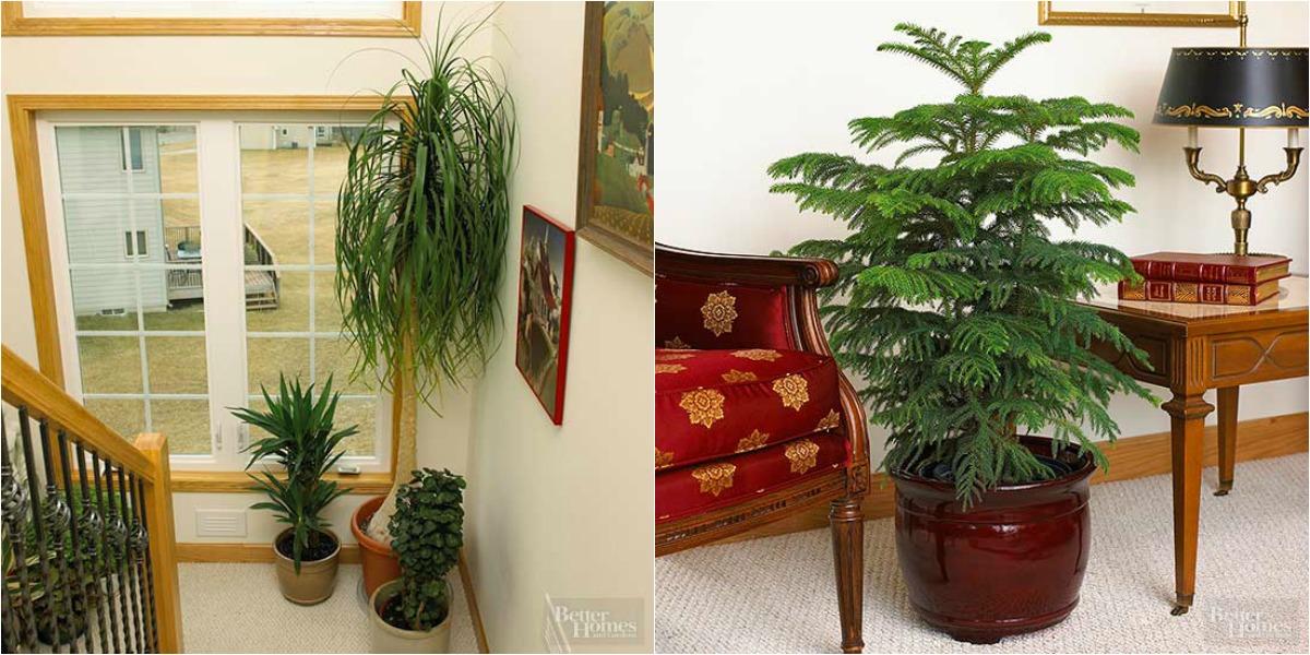Rboles de interior para decorar cualquier espacio for Arbol interior
