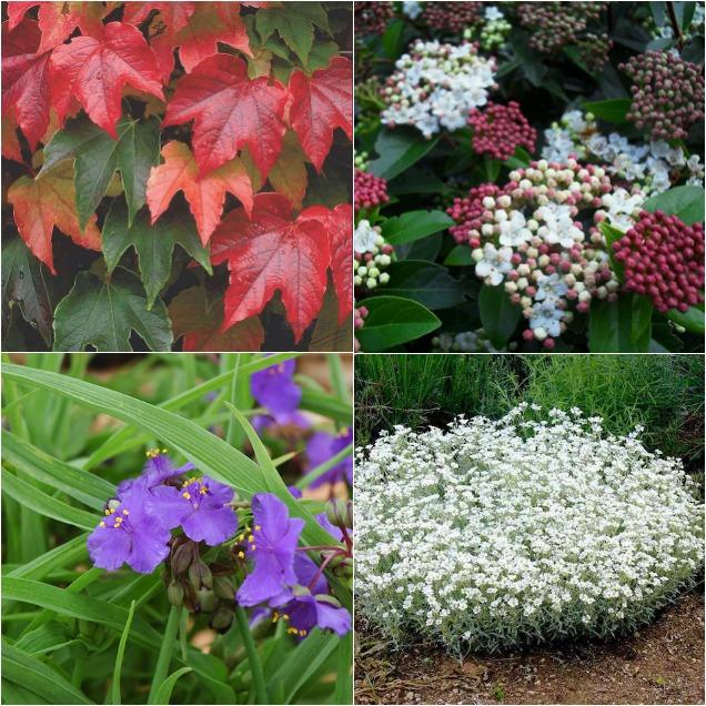 8 plantas resistentes que puedes tener en tu jard n for Plantas de jardin resistentes