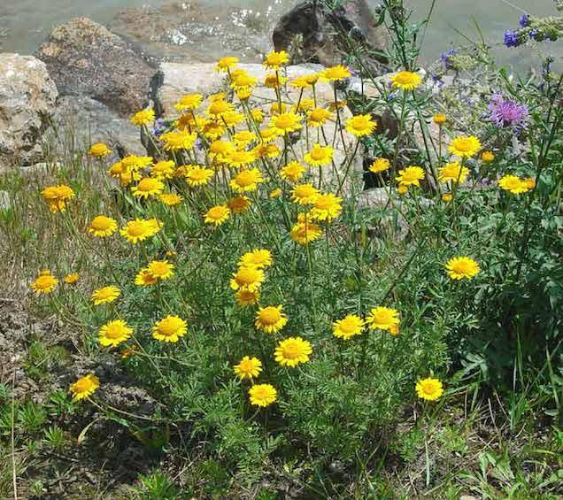 15 plantas muy resistentes - Plantas muy resistentes ...