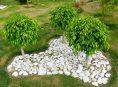 imagen ¿Cómo cultivar al Ficus benjamina?