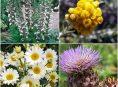 imagen 15 Plantas que son muy resistentes