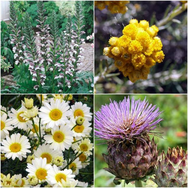 15 plantas que son muy resistentes - Plantas muy resistentes ...