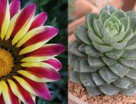 imagen 5 plantas que toleran el sol directo