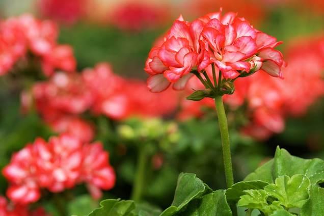 5 plantas que toleran el sol directo - Plantas muy resistentes ...