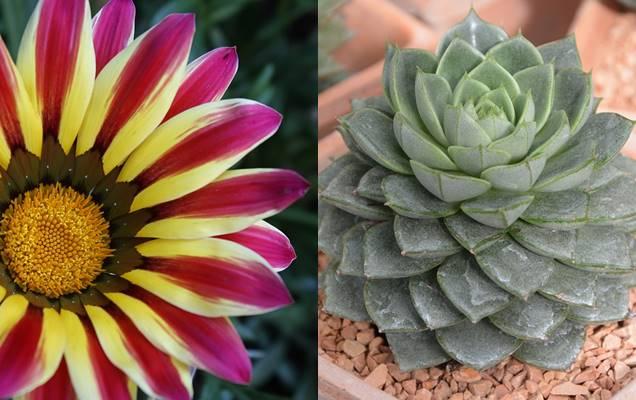 5 plantas que toleran el sol directo