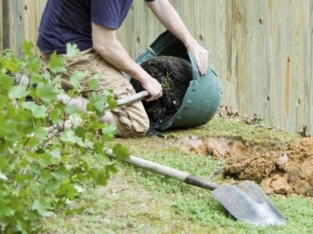 Cómo plantar un arbusto