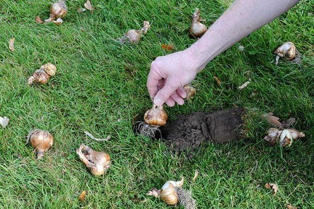 C mo plantar bulbos en el jard n - Como cultivar azafran ...