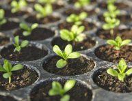 imagen Cómo sembrar semillas en el interior