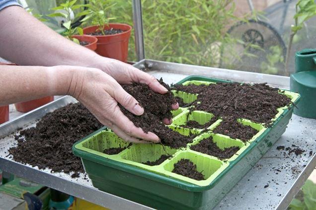 Como sembrar semillas en el interior - Semillas de interior ...