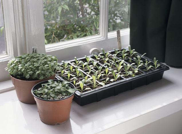 como sembrar semillas en el interior
