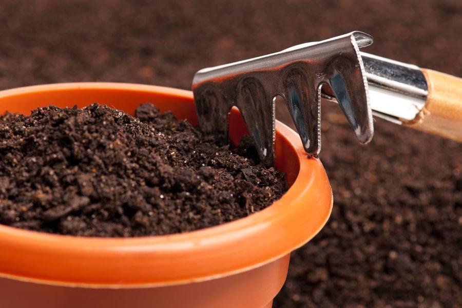 Cuáles son los pros y las contras de los compost para macetas