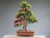 imagen Lo que debes hacer cuando te regalan un bonsái