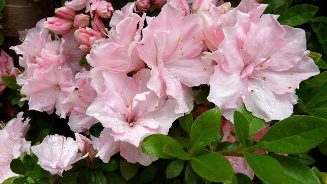 Como cuidar las plantas en oto o gu a de jardiner a for Como cuidar las plantas
