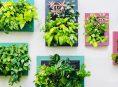 imagen Ventajas y desventajas de los jardines verticales