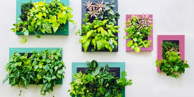 Ventajas y desventajas de los jardines verticales for Imagenes de jardines verticales