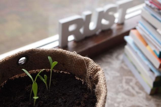 como cultivar a partir de semillas