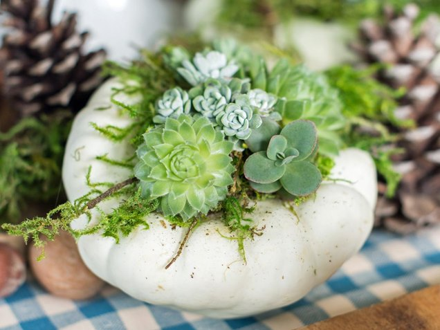 C mo cuidar de las suculentas for Aspiradora de hojas para jardin