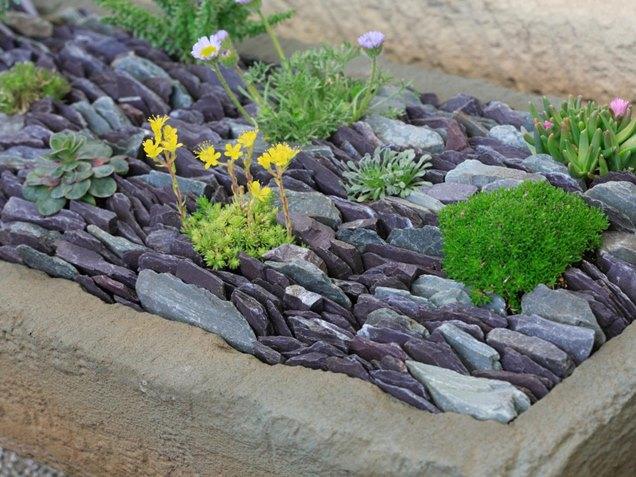 C mo cuidar de las suculentas for Blue slate garden designs