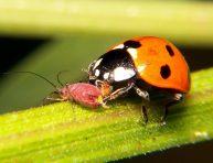 imagen Insectos beneficiosos para el jardín