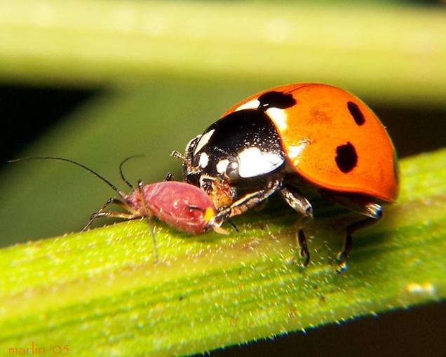Insectos y bichos beneficiosos para el jardín