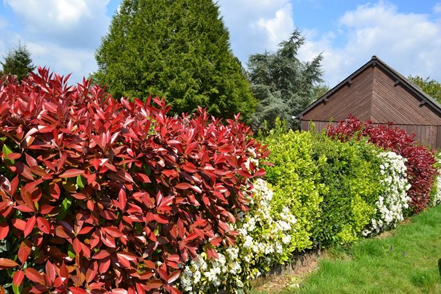 Los mejores arbustos para setos