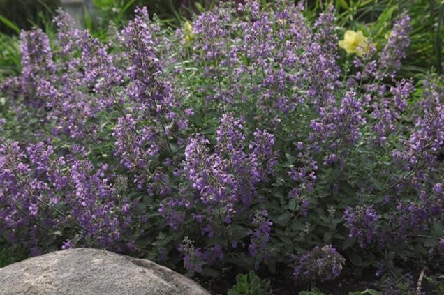 Qu plantas van bien en una pendiente for Arbustos con flores para jardin