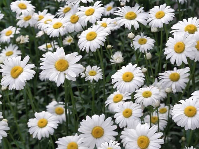 Qu plantas van bien en una pendiente for Catalogo de flores de jardin