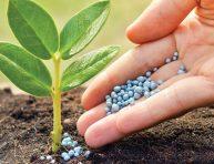 imagen Abonos minerales para las plantas