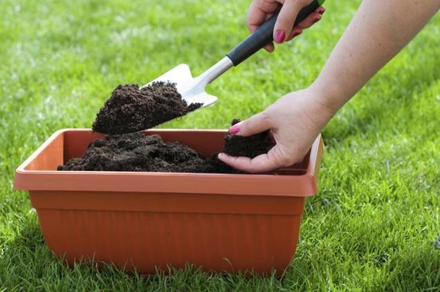 Abonos organicos para las plantas2