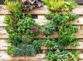imagen Las mejores ideas para crear tu propio jardín vertical