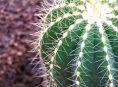 imagen Plagas y enfermedades comunes de los cactus