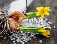 imagen Plantación y cuidados de las plantas bulbosas de primavera