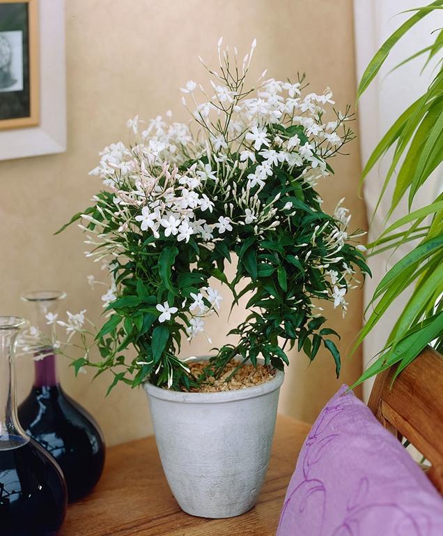 por qu las plantas necesitan un descanso invernal. Black Bedroom Furniture Sets. Home Design Ideas