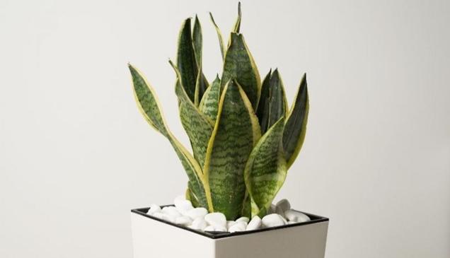 7 mejores plantas para la oficina