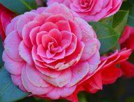 imagen ¿Cómo ayudar a una planta para que florezca?