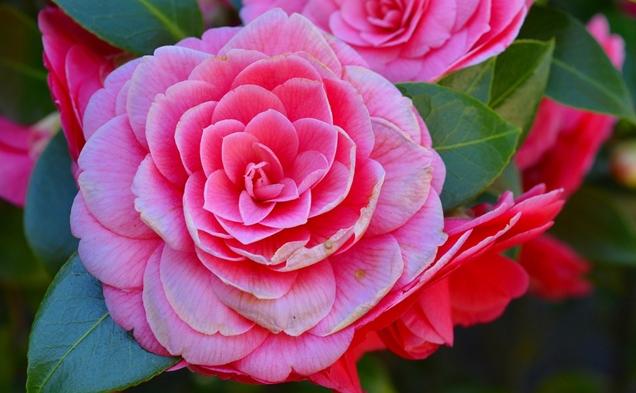 florecimiento de las plantas 1