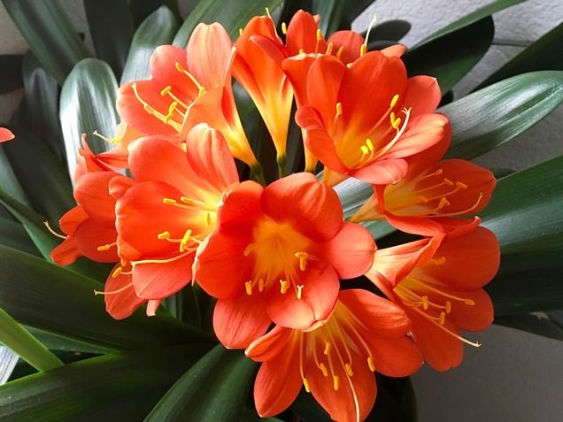 florecimiento de las plantas 5