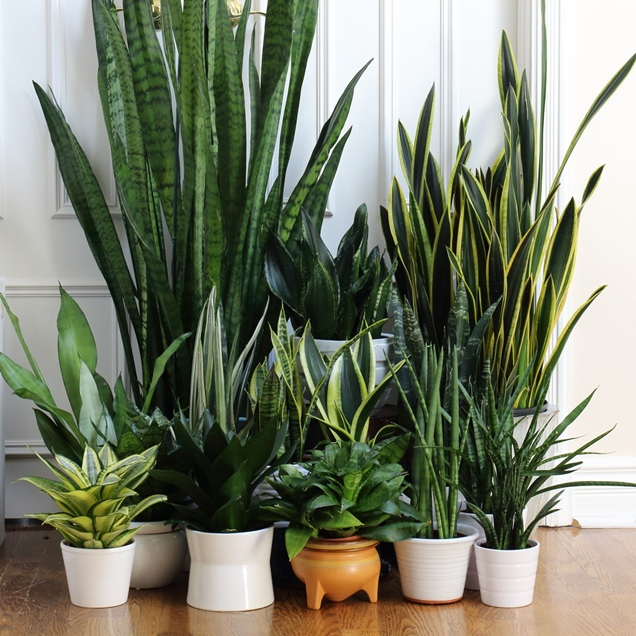 duracion de vida de las plantas