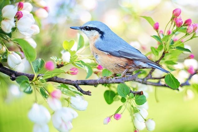 cómo atraer la fauna e insectos beneficiosos a tu jardín 1