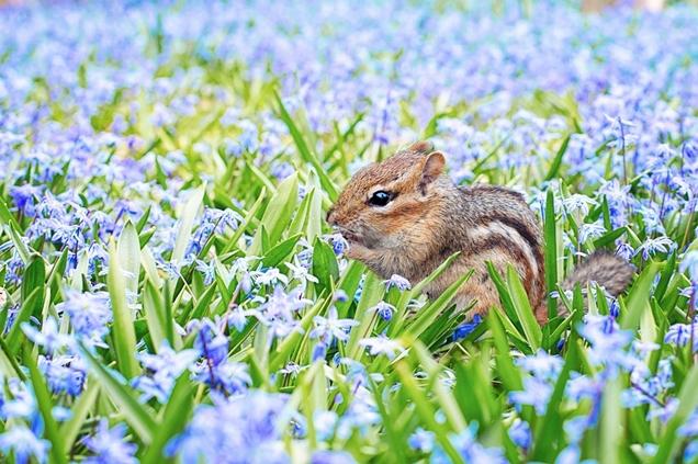 cómo atraer la fauna e insectos beneficiosos a tu jardín 3