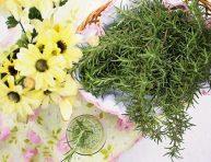 imagen Hierbas comunes en la cocina que puedes cultivar en casa
