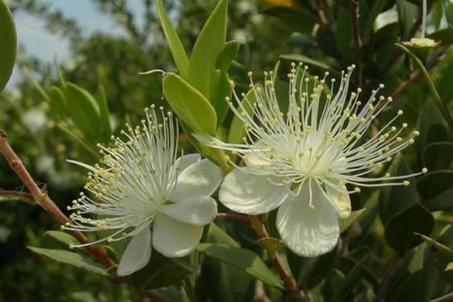 plantas aromáticas para tu jardín 6