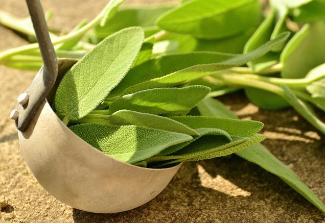 hierbas para la cocina que puedes cultivar en casa 8
