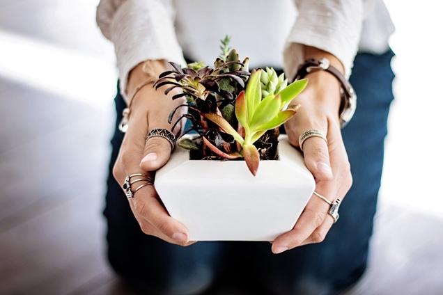 3 factores a tener en cuenta al cultivar suculentas