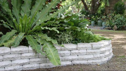 ideas de paisajismo de bajo mantenimiento en el patio trasero Ideas De Paisajismo De Bajo Costo